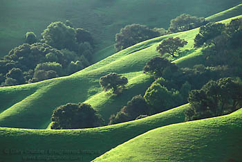 Photo of green hills in spring