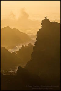 Photo: Seagull and crashig wave at sunset, Jug Handle State Reserve, Mendocino County, California