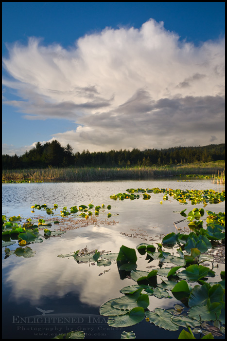 Image: Cumulonimbus storm cloud over pond and forest, Crescent City, California
