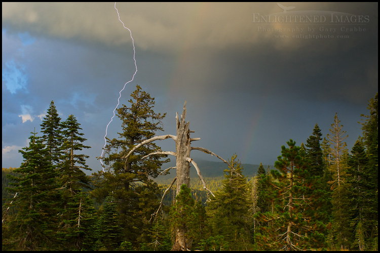 Image: Lightning bolt in forest near the Sierra Buttes, Northern Sierra, California