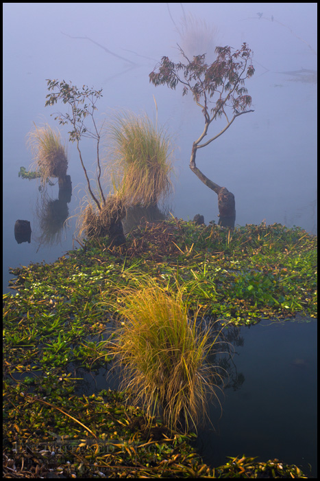 Image:  It's a Dr. Seuss Landscape, somewhere in the Sacramento - San Joaquin River Delta, California