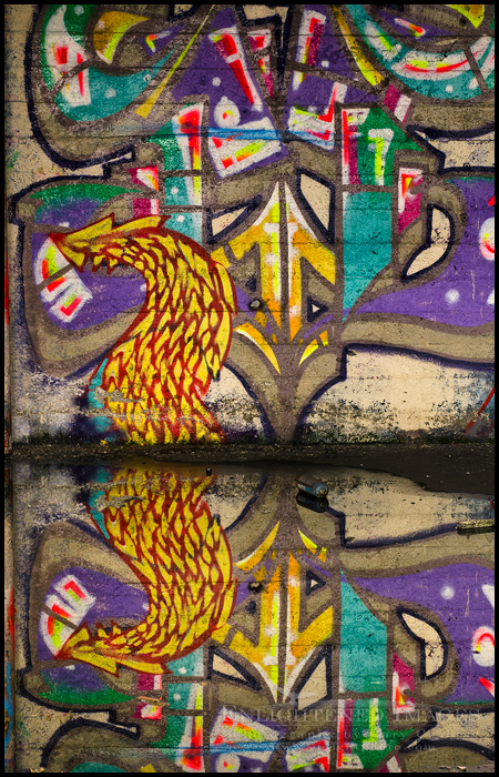 Image: Graffiti reflection in standing water inside an abandoned building, Berkeley, California