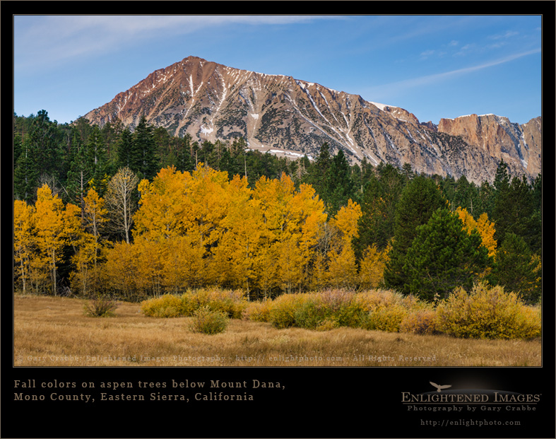 Image: Fall colors on aspen trees below Mount Dana, Eastern Sierra, California