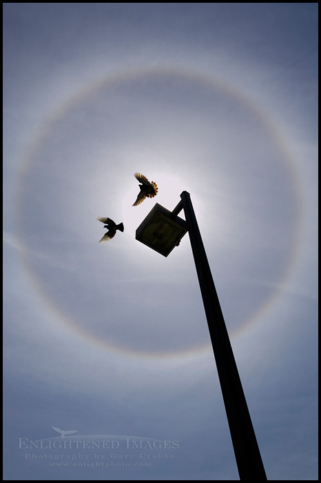 Image: Two birds flying in a Solar Halo circle of refracted light in ice crystals around sun and blue sky and clouds