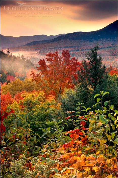 Image: Fall colors on trees in the White Mountain National Forest, New Hampshire