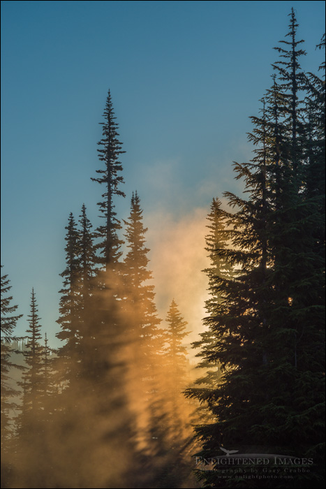 Image: Sunrise light through trees, Mount Rainier National Park, Washington