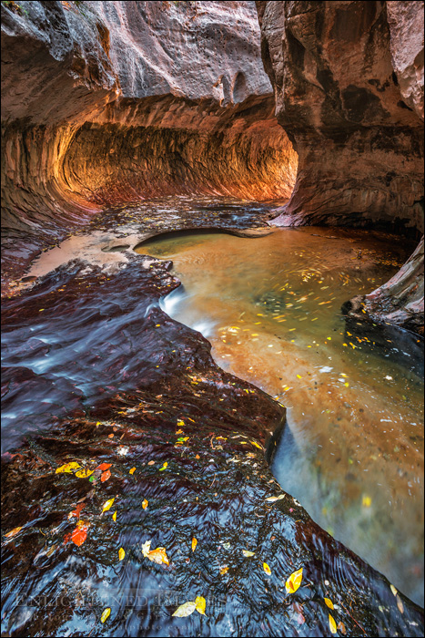 Image: Left Fork of North Creek at The Subway, Zion National Park, Utah