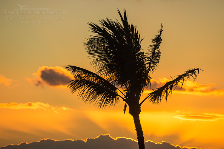 Image: Sunset behind palm tree, Kihei, Maui, Hawaii