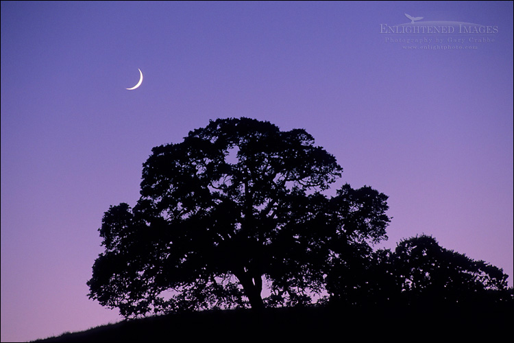 Image: Crescent Moon in evening light over oak tree on Palassou Ridge, Santa Clara County, California
