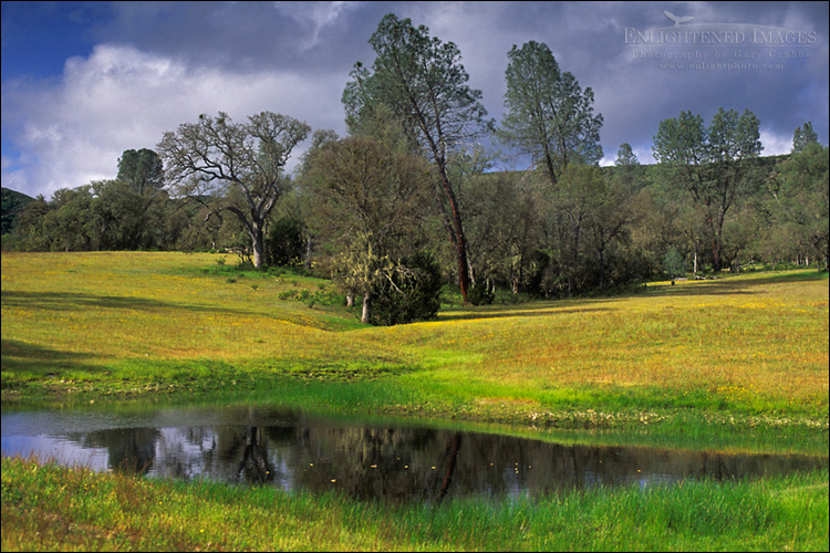 Image: Spring in the San Antonio Valley, Santa Clara County, California