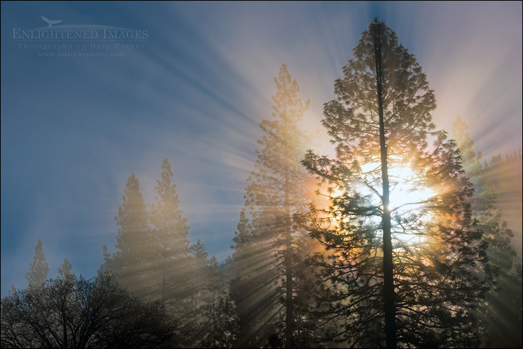 Image: Sunlight through trees and mist, Yosemite Valley, Yosemite National Park, California