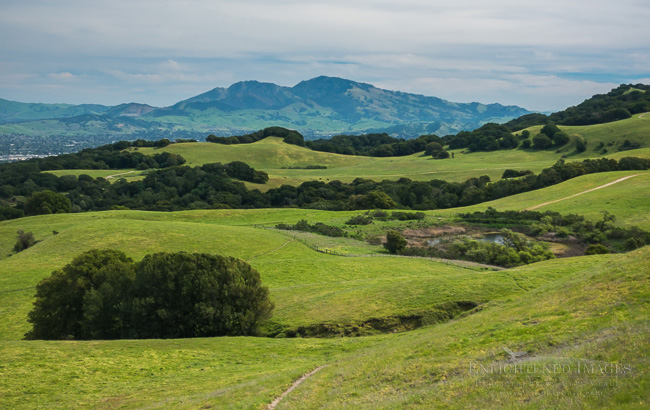 Image: The fresh green hills of Briones Regional Park in spring, looking toward Mount Diablo, Contra Costa County, California