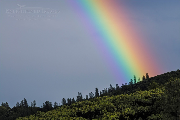 Image: Rainbow over a forest after a storm, Whiskeytown National Recreation Area, Shasta County, California