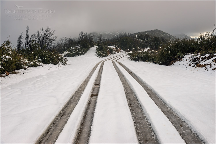 Image: Tire tracks through fresh snow of road through the Los Padres National Forest, Monterey County, California
