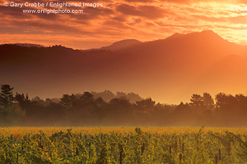 Stock Photo Picture Image Sunset Light Over A Vineyard In